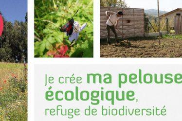 je cree ma pelouse ecologique refuge de biodiversite